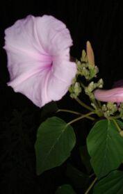 Information about mediterranean gardening - Plant notes