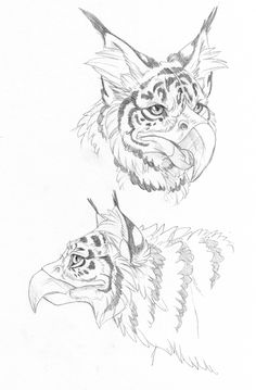 Tiger griffin by hibbary on DeviantArt