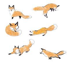 キツネ達 fox