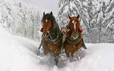 Horses and winter