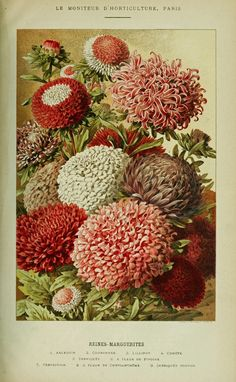 French Horticultural Illustration, 1894