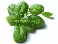 Warenkunde Basilikum: Erfahren Sie auf EAT SMARTER, was man über Basilikum wissen sollte.