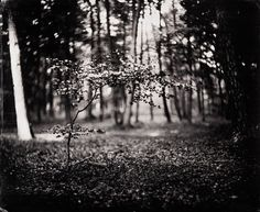 """Luther Gerlach """"Enchanted Forest"""" wet plate collodion photography, Holland"""