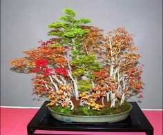 Bonsai Forest | This playful mixed Japanese bonsai forest is by Juan José Bueno Gil .
