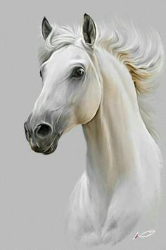 Horse by irudd on DeviantArt - Pferd Pretty Horses, Beautiful Horses, Animals Beautiful, Majestic Horse, Horse Drawings, Animal Drawings, Art Drawings, Horse Head Drawing, Drawing Animals
