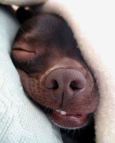 Sleepy...  #Sleep #Cute #Animals