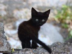 ラブリー-KittyCats、フワフワ·子猫:子猫T3H-忍者