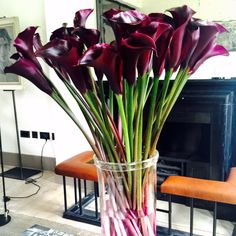 Black Calla Lily from #FLOWERBX