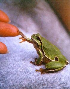 Frog Shaking Hands