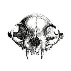 Illustration / blackwork / dotwork by Mevin Kartin, graphic designer & illustrator.