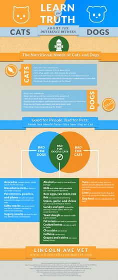 Learn the Truth about the Differences between Cats and Dogs #cats #dogs #infographics
