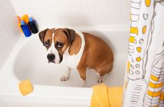 Best Bully Sticks shares tips on how to Making Bath Time More Enjoyable for your dog and you! Dog baths help your dog smell and feel fresh and clean.