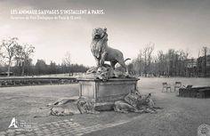 dans-ta-pub-animaux-paris-zoo-publicis-conseil-4