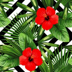 Illustration of Print summer exotic jungle plant tropical palm leaves and flower red hibiscus vector art, clipart and stock vectors. Tropical Flowers, Motif Tropical, Tropical Art, Spring Flowers, Exotic Flowers, Flowery Wallpaper, Tropical Wallpaper, Flower Art, Art Flowers
