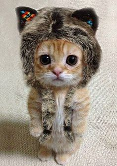 Cute cat. http://best-animalpictures.com/50-pictures-of-the-cutest-cats-ever.html