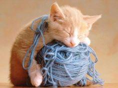 Cute Kitty - Babies Pets and Animals Photo (17268902) - Fanpop