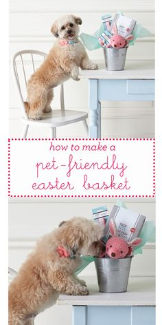 From toys and treats and things to avoid, we everything you need for a pet-friendly Easter basket! basket ideas for dogs Easter Martha Stewart Pets, Dog Enrichment, Diy Dog Collar, Diy Dog Toys, Diy Dog Bed, Dog Crafts, Dog Activities, Easter Baskets, Puppies