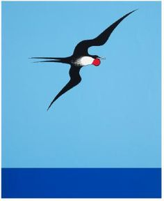 Don Binney: Pacific Frigate Bird