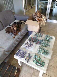 📸🐶 Helping his mom pack some orders Long Haired Dachshund, Dog Harness, Dog Photos, Mom, Mothers