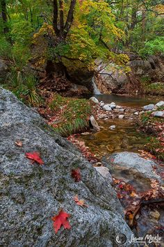 Smith Spring, Guadalupe Mountains National Park, West Texas