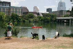 Everyone's favorite dog park in the heart of Austin