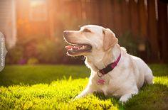 happy dog photography - Pesquisa Google