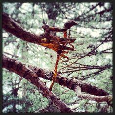 Il ramo di un albero ci tende la mano in #Sila #calabria