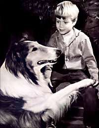 Lassie--if you're an animal lover like me and anywhere near my age (I'm not telling) you remember and loved this show.