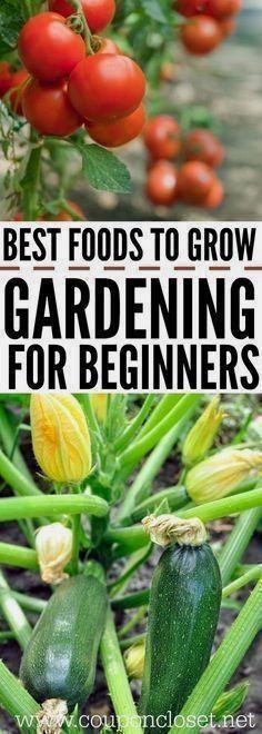 How to garden for beginners. - Gardening for Beginners - The best foods to grow for beginner gardening. These are easy foods to grow in the vegetable garden #gardeningforbeginners #vegetablegardeninglayout #vegetablegardenbeginner