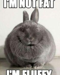 Bunny Foo Foo says this a lot Cute Animal Memes, Animal Jokes, Cute Funny Animals, Funny Animal Pictures, Cute Baby Animals, Funny Cute, Animals And Pets, Cute Baby Bunnies, Funny Bunnies