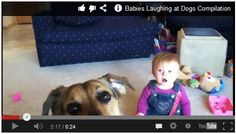 hehe Babies laughing at Dogs :) Watch here:  http://gdurl.tk/D6