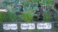 """Alimentos Increíbles Todmorden  La iniciativa se llama """"incredible edible todmorden"""" (traducible por """"increíble comestible todmorden"""" o """"alimentos increíbles todmorden"""") y su objetivo es que cada vez más personas produzcan sus propios comestibles, como frutas, verduras e incluso carnes."""