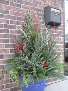 A #holiday planter outside the BLC office. Plant material includes spruce tips, eucalyptus branches, and #dogwood branches. #holidaydecor #christmasdecor #holidayplants #winterplanter