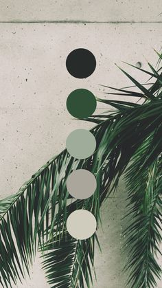Brand color palette inspiration designed by Amari Creative, branding and design studio. Colour Pallette, Colour Schemes, Green Palette, Taupe Color Palettes, Colour Board, Aesthetic Wallpapers, Color Inspiration, Wallpaper Backgrounds, Paint Colors