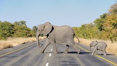 This one, who's just learned the rules of the road. | 15 Baby Elephants We Would Like To Be Best Friends With