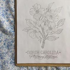 35. North Carolina  Flowering Dogwood #dehaanstateflowerssketch by jill_dehaan