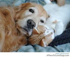 When it comes to friends, goldens don't discriminate.