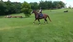 This one horse I ride does this almost every time we cross a small and short ditch. Very uncomfortable.