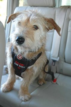Company Of Animals Clix Dog Car Harness, 23-29-Inch Girth « dogsiteworld.com