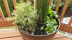 The Ultimate Guide To DIY Outdoor/Indoor Mini Fish Ponds   STEP-BY-STE – AQUAPROS Fish Ponds Backyard, Patio Pond, Water Garden Plants, Pond Plants, Ponds For Small Gardens, Mini Pond, Outdoor Refrigerator, Natural Swimming Ponds, Floating Plants