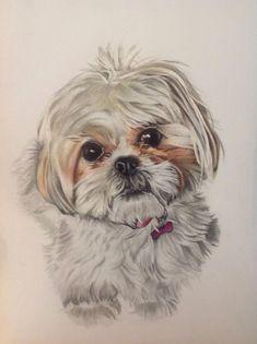 shih tzu drawings in pencil Perro Shih Tzu, Shih Tzu Dog, Animal Paintings, Animal Drawings, Art Drawings, Watercolor Animals, Dog Tattoos, Dog Portraits, Dog Art