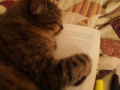 Sweet dreams to Mya, who knows a good book when she sleeps on it. #NYPLLittleLion