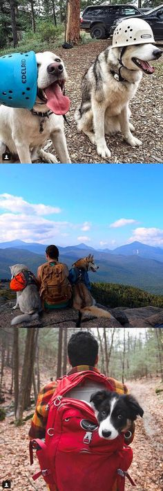 Taking a camping trip soon? New Instagram account 'Camping With Dogs' prove that dogs make great camping buddies