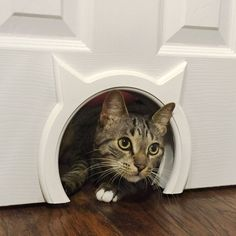 Kitty Pass Interior Cat door - for the basement doors so cats can still get down stairs, and closet doors to hide litter
