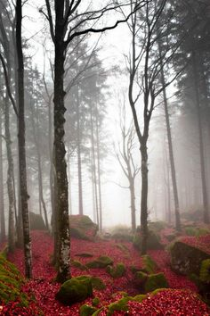 Misty Forest, Basque Country, Spain photo via wolf Wonderful Places, Beautiful Places, Beautiful Pictures, Foto Nature, Misty Forest, Basque Country, Tree Forest, Nature Animals, Beautiful World