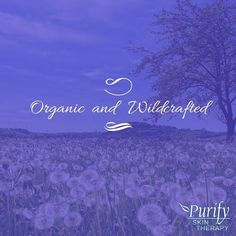 Organic and wildcrafted is how we define ourselves. #PurifySkinTherapy #CertifiedOrganic #WildCrafted #Natural #EssentialOils #Quality…