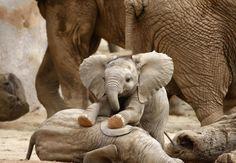 Juste deux éléphanteaux