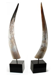 water buffalo horn bookends...living room