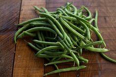 Provider Bush Bean (50 days)