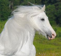 Fairy tale Quarter Horse